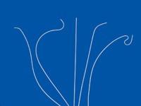 Cook® Polyethylene Catheters – Angiographic